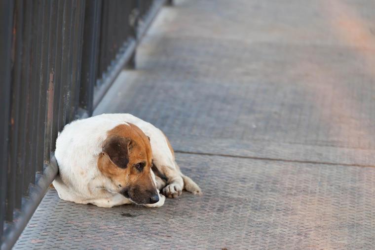 Вистинска приказна: Кучето кое чекало 4 дена на еден мост и гледало во водата