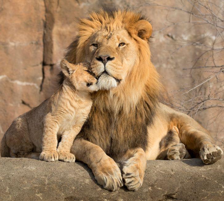 20 семејства животни што ќе ве натераат да посакате да ги прегрнете вашите родители веднаш