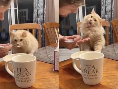 Погледнете ја смешната реакција на оваа мачка која за прв пат пробува сладолед