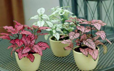 5 розови домашни растенија за кои нема да верувате дека се вистински