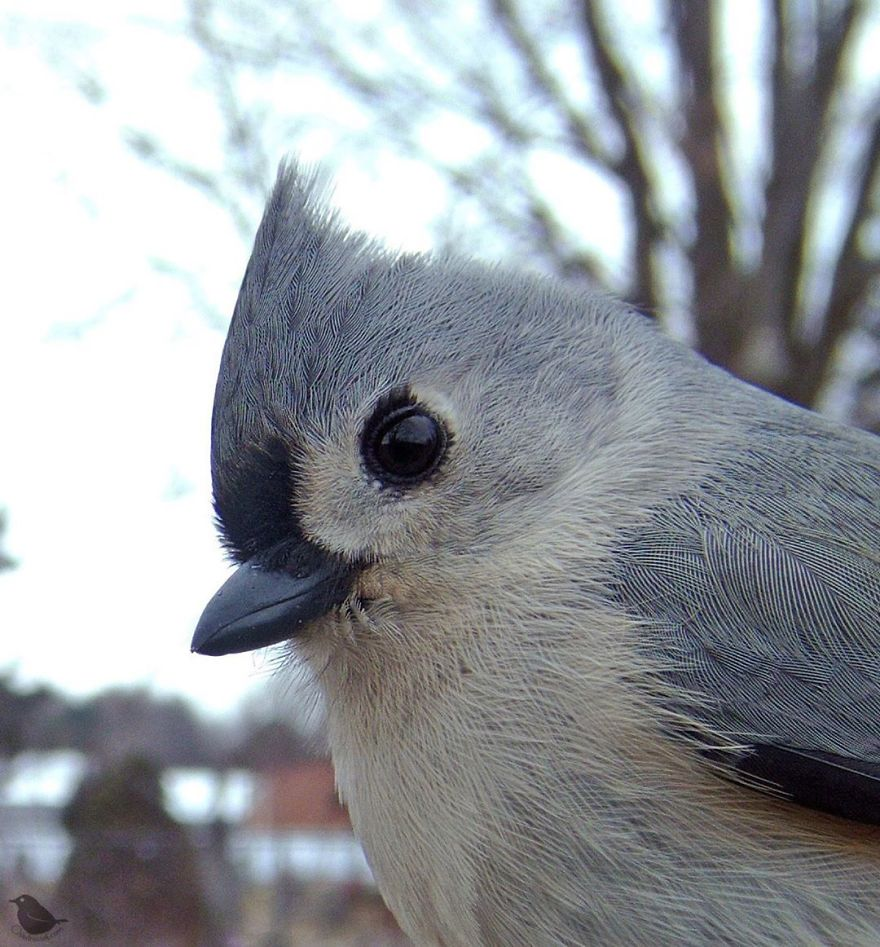 Една жена ставила фотоапарат до местото со храна за птици, а фотографиите што ги направила се прекрасни