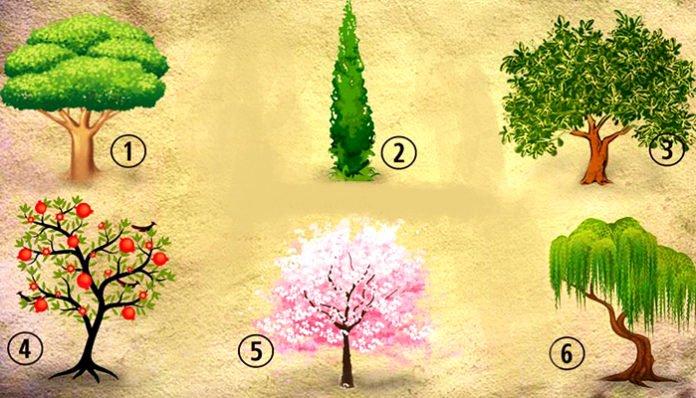Кое дрво би го засадиле во вашата градина? Изберете едно и откријте нешто за себе