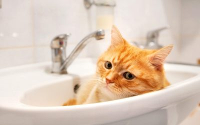 Зошто некои мачки сакаат да лежат во мијалникот?