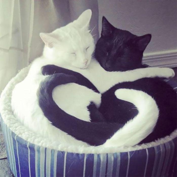 20 фотографии од мачки од што спијат во необична положба