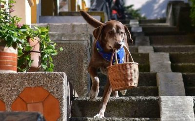 Запознајте го Ерос: Кучето кое доставува намирници на своите соседи
