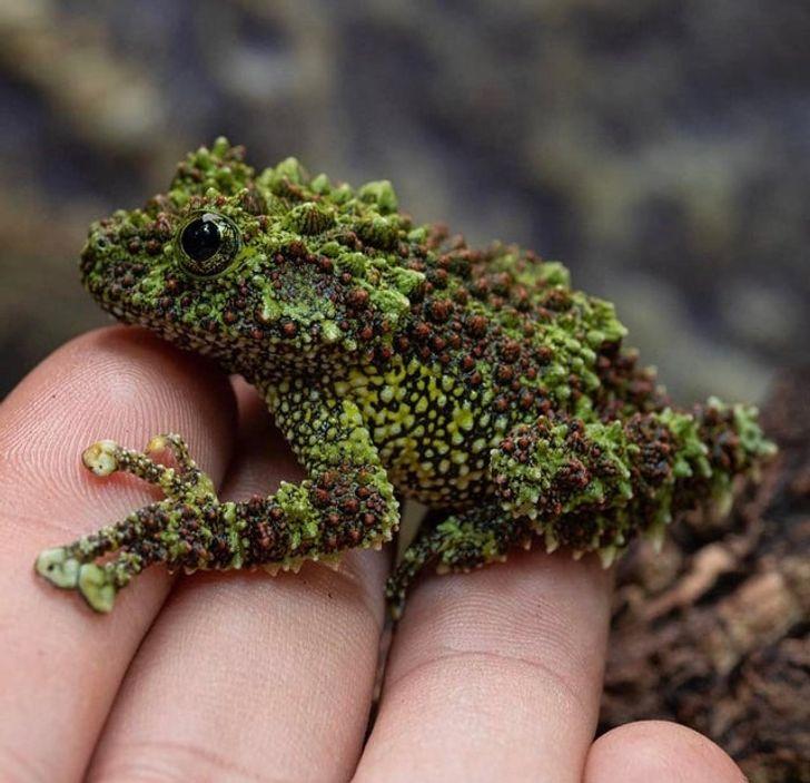 12 фотографии од природата што ќе ве остават вчудоневидени