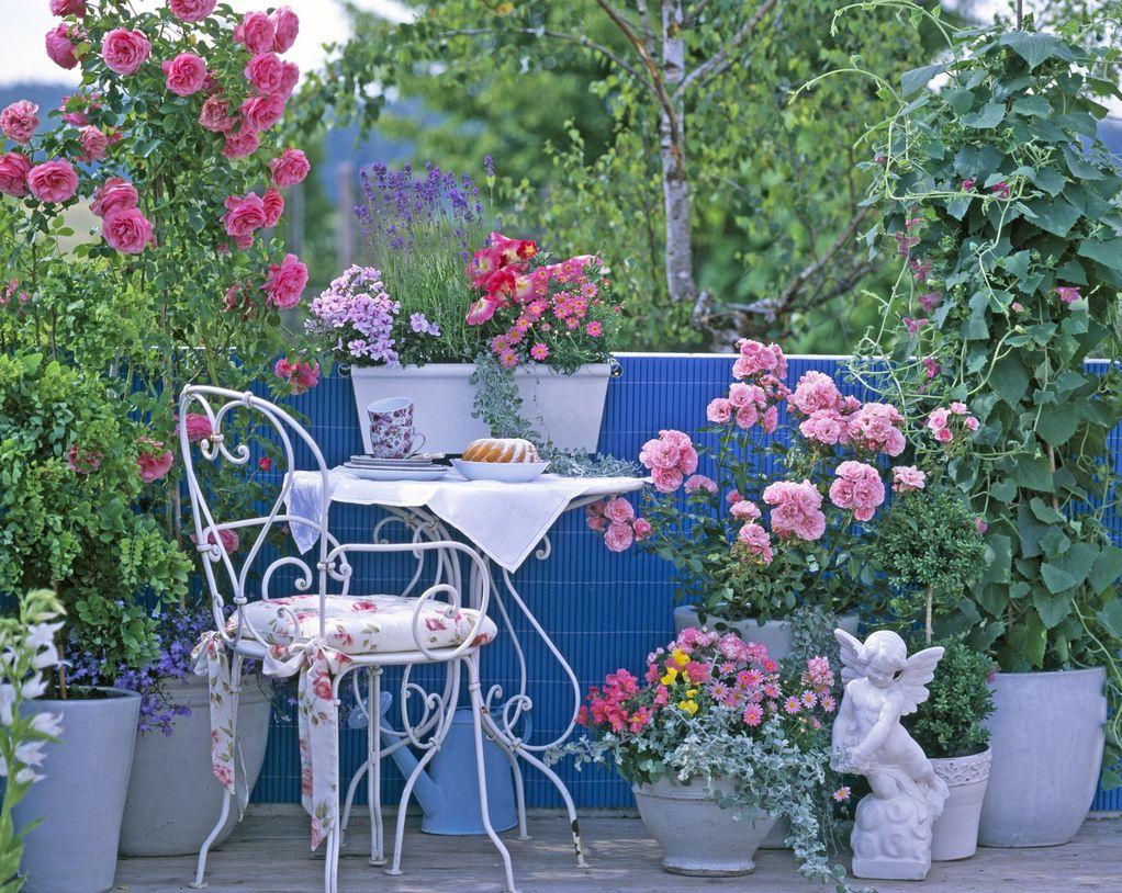 4 совети како да создадете царство од рози на балконот