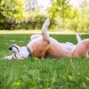 5 видови кучиња што се особено чувствителни на штетните сончеви зраци