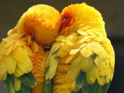 5 животни што им се верни на своите партнери