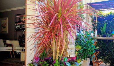 8 растенија што не се лесни за одгледување