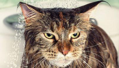 Дали знаете зошто мачките мразат вода?
