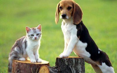 Знаци што покажуваат дека вашето домашно милениче е под стрес