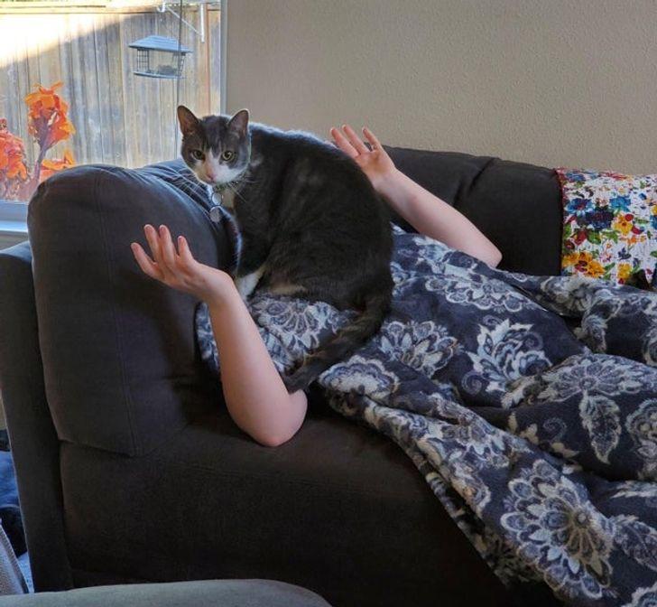 15 непослушни мачки што ќе ви покажат кој е шефот во куќата