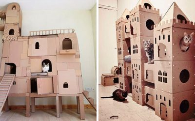 Наместо да ги фрлаат старите картонски кутии, луѓето ги претвораат во неверојатни замоци за мачки