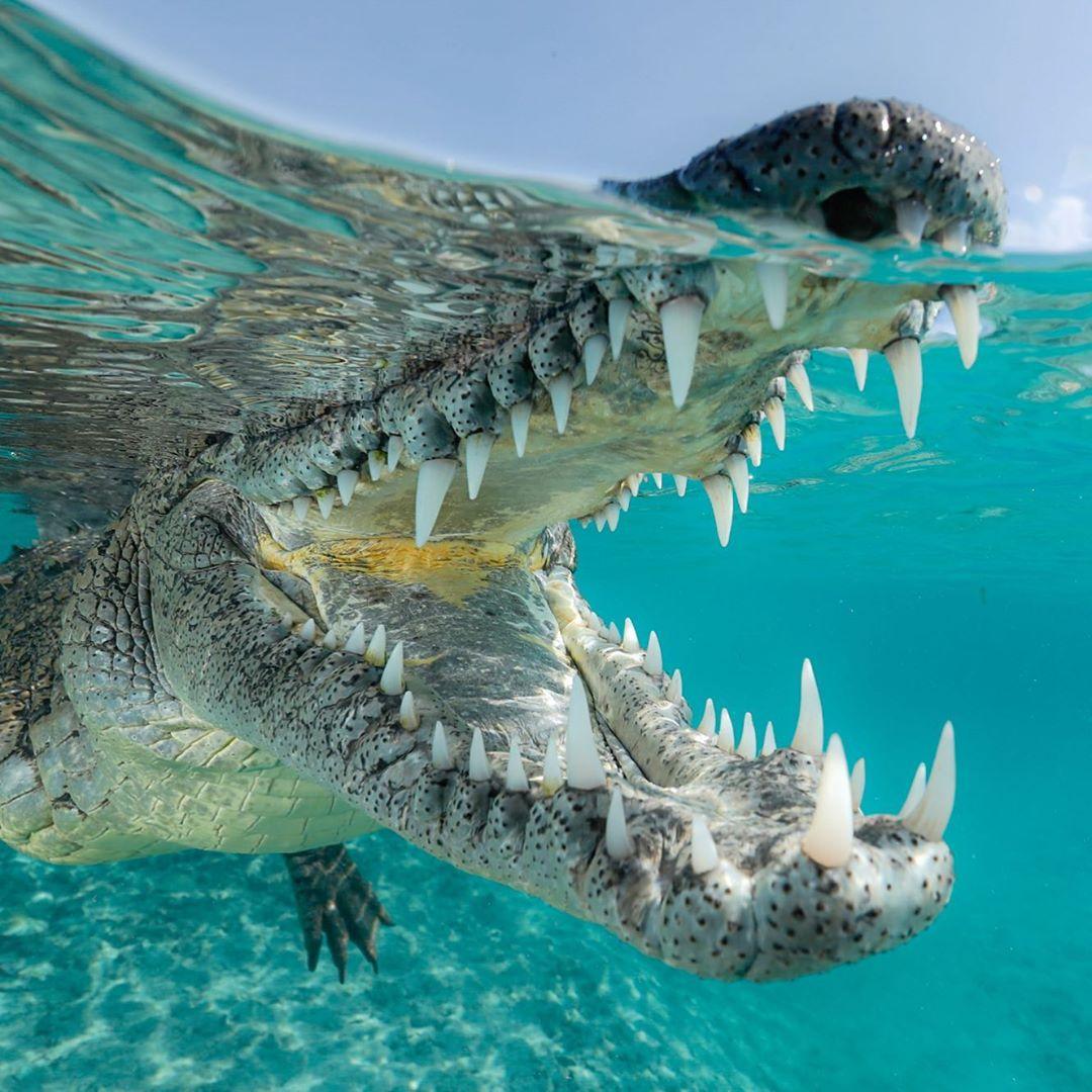 13 факти за животните што ќе ве зачудат