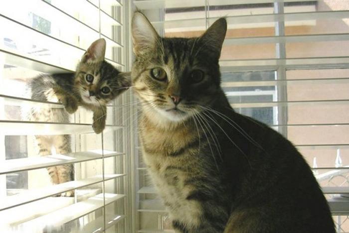 20 симпатични фотографии од мачки со своите мали мачиња