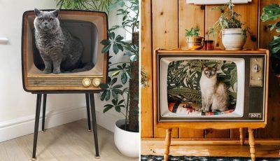 Луѓето ги претвораат старите телевизори во прекрасни кревети за нивните крзнени пријатели