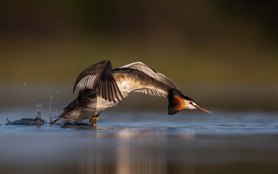 20-те најдобри фотографии на птици за 2020 година