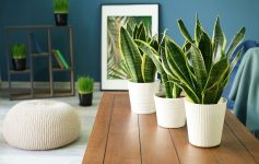 3 песни што треба да им ги пуштате на вашите растенија за да растат побрзо