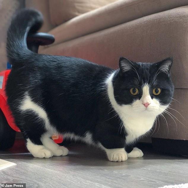 Запознајте го Манчестер: Мачорот кој ги освои срцата на илјадници луѓе