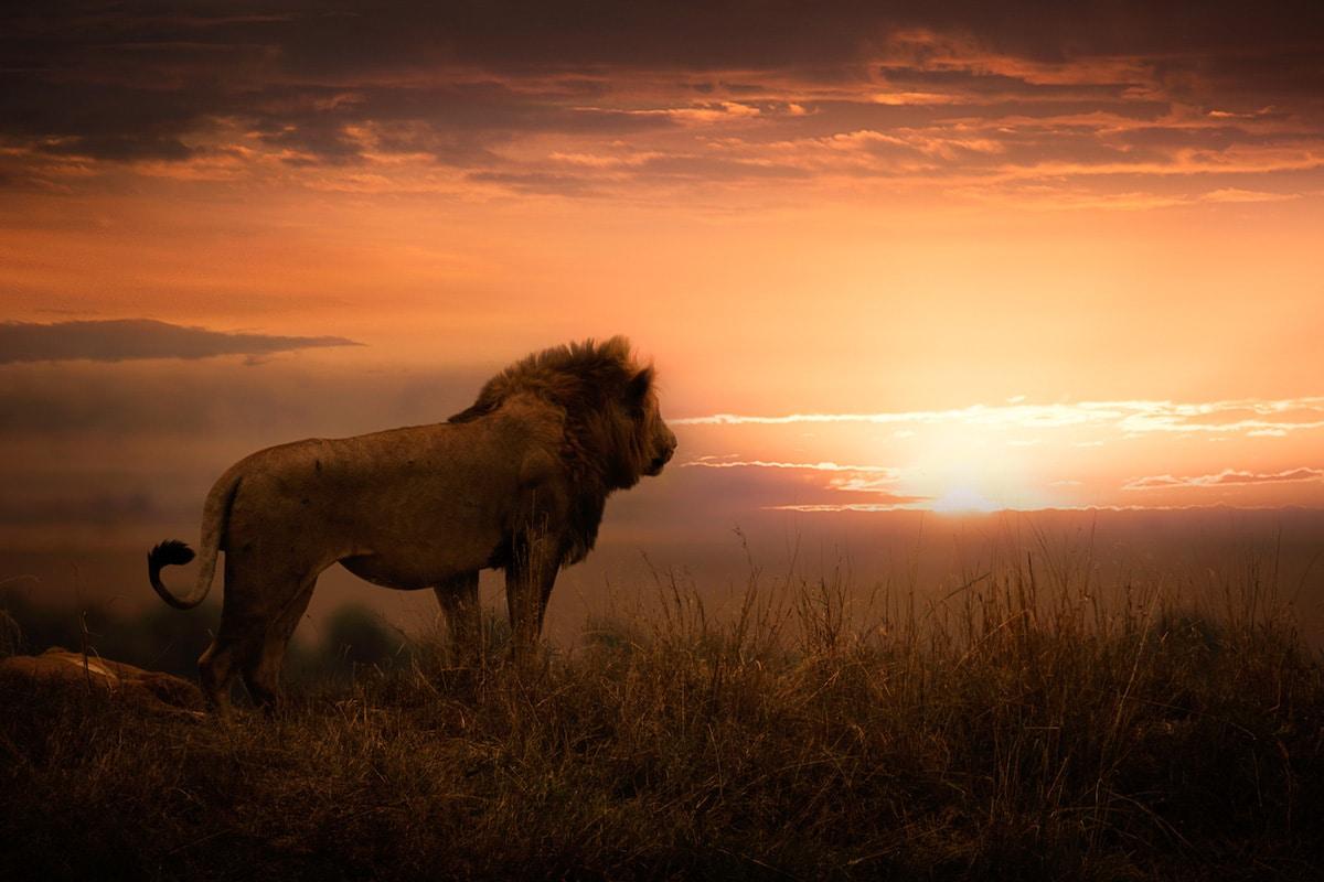 Фотографски проект за помош на загрозените природни паркови во Африка