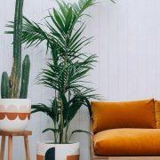 Кое растение треба да го чувате во дневната соба, а кое во кујната?