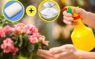 4 трикови со сода бикарбона што можете да ги искористите во вашата градина