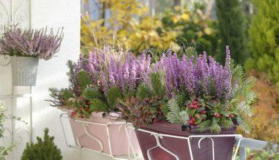 Цветен балкон и во есен: Прекрасен цвет на кој студот и маглата не му можат ништо