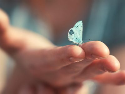 Легенда за сината пеперутка: Ова е сè што треба да знаете за животот!