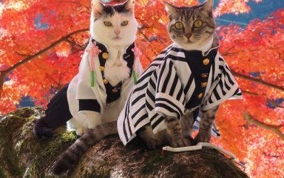 Еден човек создава аниме костуми за своите мачки кои изгледаат навистина кул