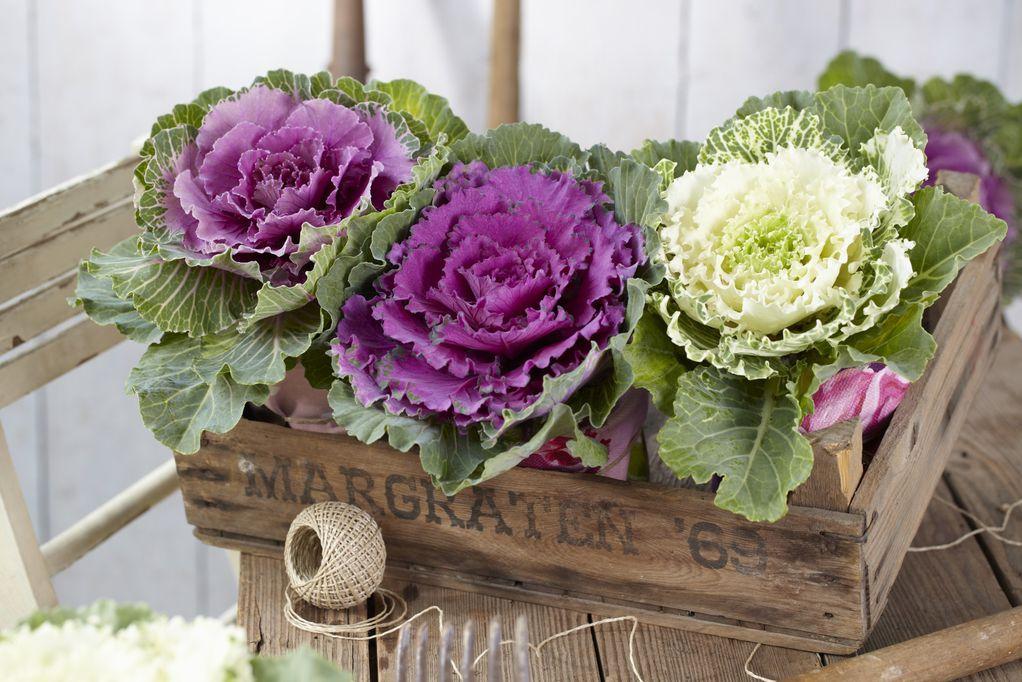Цвеќиња со кои балконот ќе изгледа магично во текот на есента