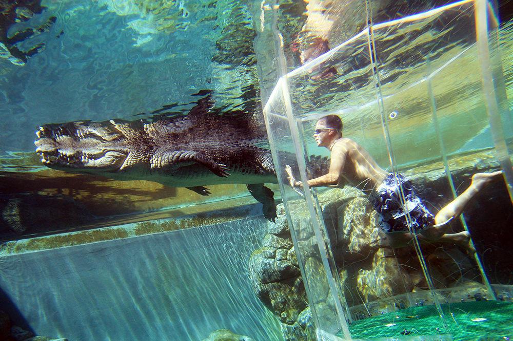 Тематски парк во Австралија во кој можете да пливате со огромни крокодили