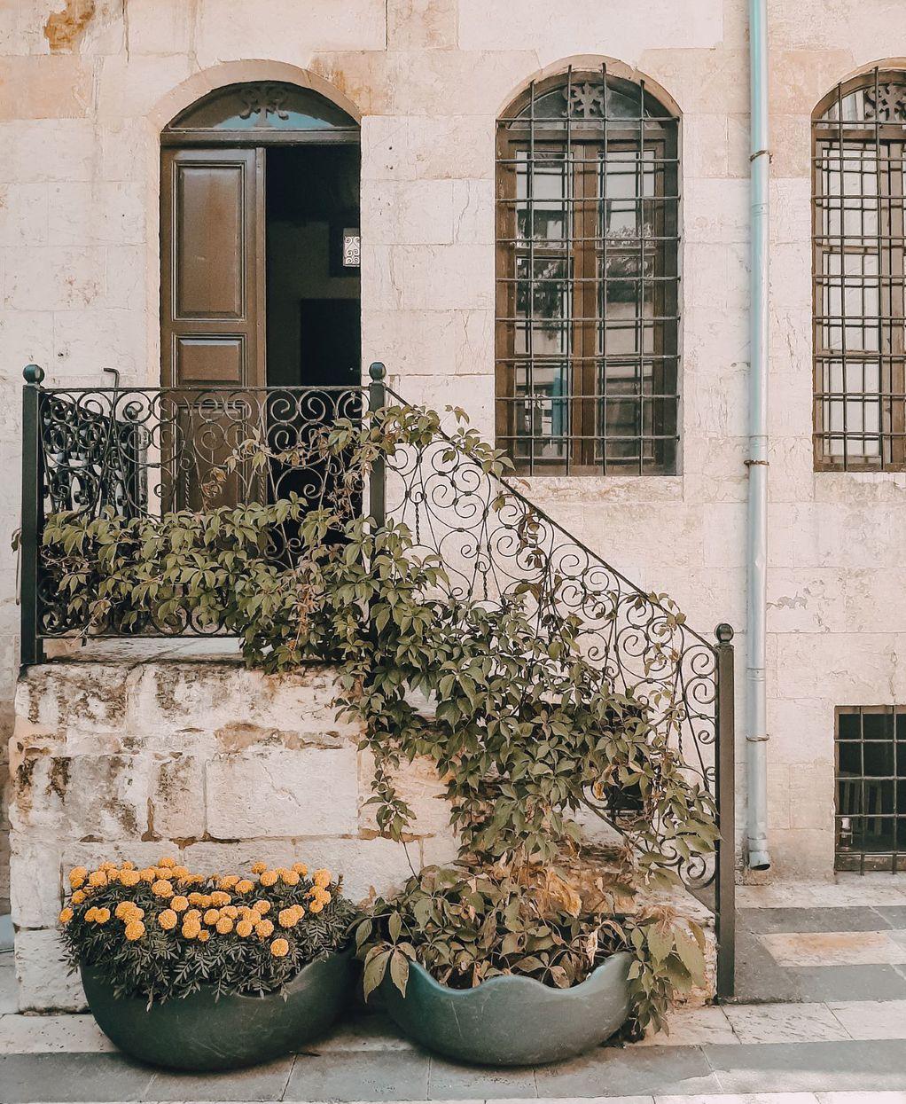 Овој медитерански град е единственото место во светот каде што растат овие необични рози