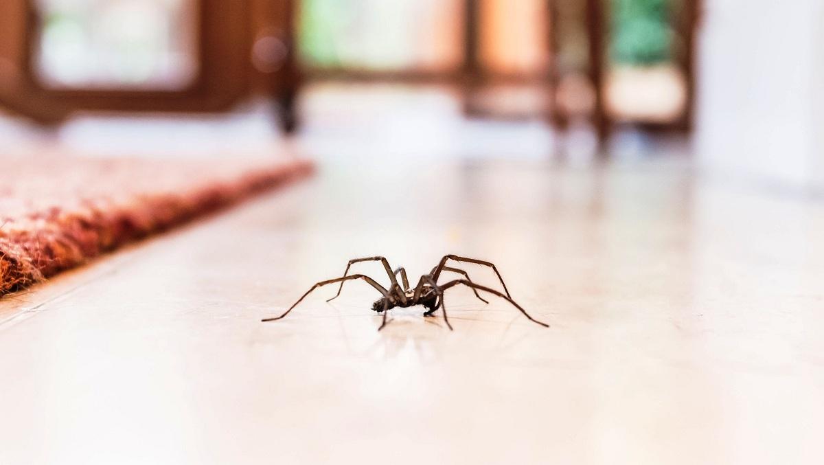 Како да се ослободите од пајаците и од нивните мрежи?