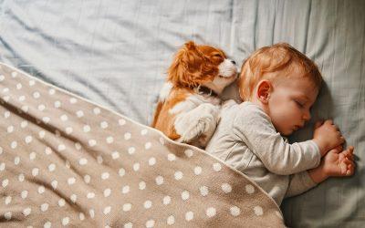 Што да правите ако во куќата имате бебе и домашно милениче?