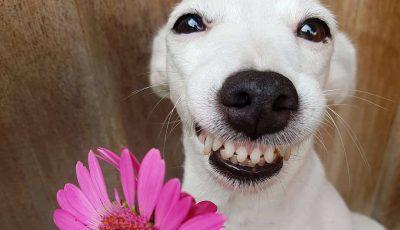 Запознајте го Еуросаурус, кучето со најзаразната насмевка досега
