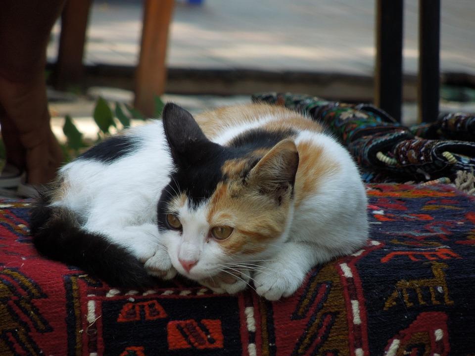 Хуман однос кон животните: Апликација ќе ги лоцира мачките и кучињата скитници низ Истанбул