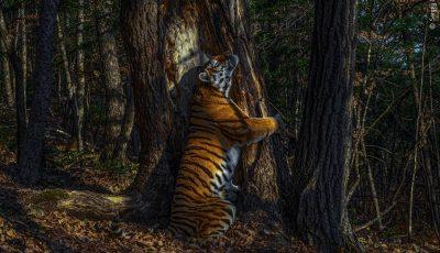 Најдобрите фотографии од дивиот свет за 2020 година