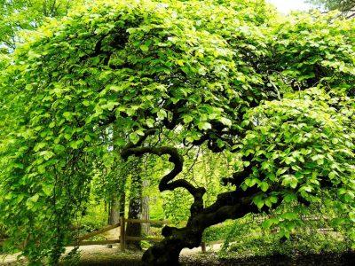 Невообичаена шума која ги збунува ботаничарите