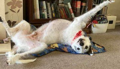 Нов предизвик во кој ќе сакате да се вклучите ако имате куче