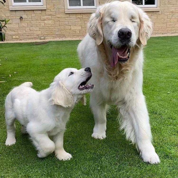 Слепо куче и неговото куче-помошник се неразделни пријатели