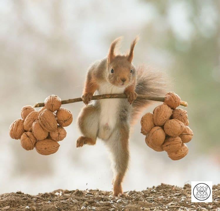 Слатки фотографии од верверички и минијатурни реквизити