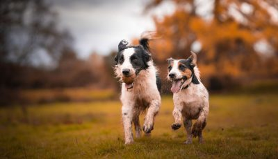 Слатки фотографии од кучиња кои уживаат во есента