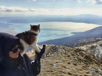 Запознајте ја мачката која се искачи на највисокиот врв во Австрија