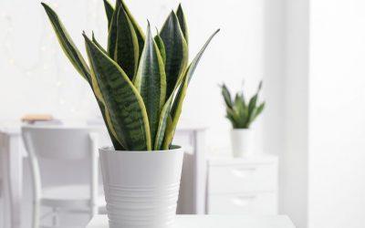 10 домашни растенија за кои сигурно не сте знаеле дека имаат позитивно влијание врз здравјето