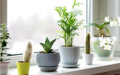 Апликации што ќе ви помогнат во грижата за растенијата