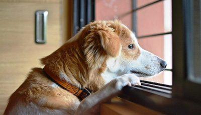 Дали го разгалувате вашето куче со вашето однесување?
