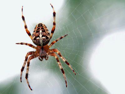 Како да ги спречите пајаците да влезат во вашиот дом оваа есен?