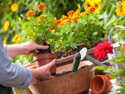 Пресадување растенија според месечевиот календар: Кога да им ја смените земјата на вашите убавици?
