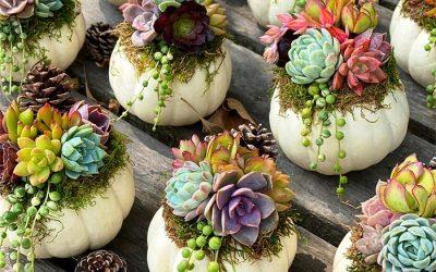 Тиквите со сукуленти се едни од најубавите декорации за оваа есен